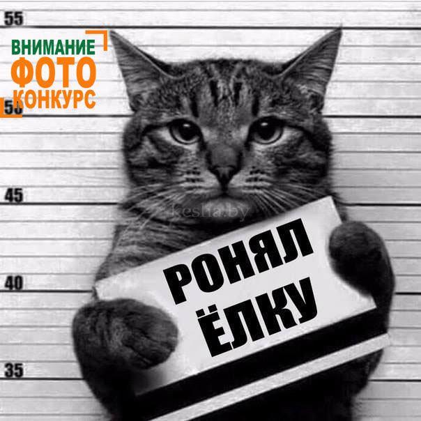 Новогодний фото конкурс для кошек