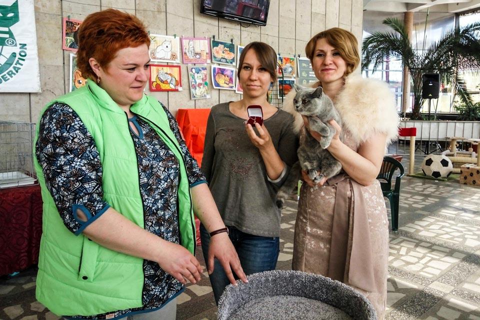 Выставка кошек Золотая кошка Бреста