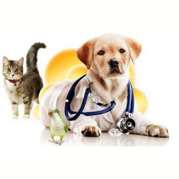 Ветеринарная клиника в Бресте