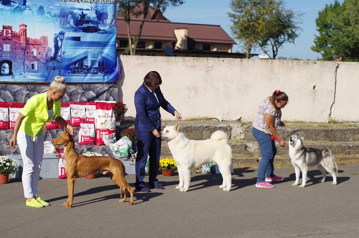 Выставка собак в Бресте 18 сентября 2016г