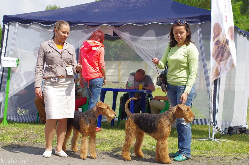 Выставка собак в Бресте
