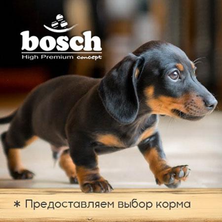 Новогодняя акция от Бош