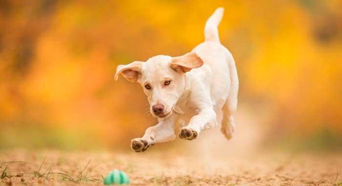 Корм для собак Роял канин в Орле | Купить Корм для собак